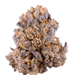 Amsterdam Marijuana Seeds Coupons Caramelicious Seeds