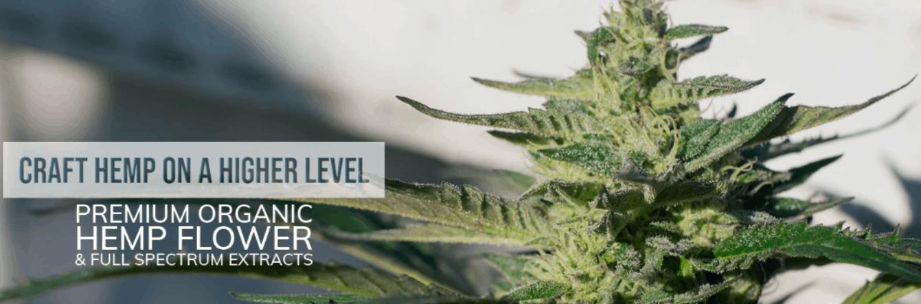 Dreamland Organics Cannabis Coupons Premium Hemp Flowers