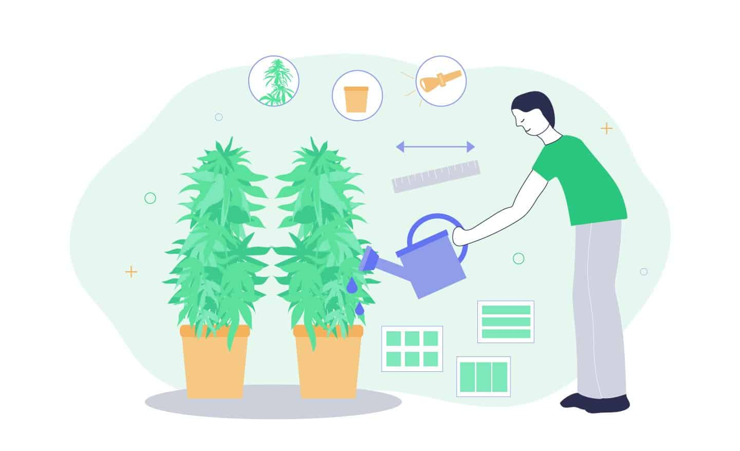 ideal grow room size per plant for growing cannabis